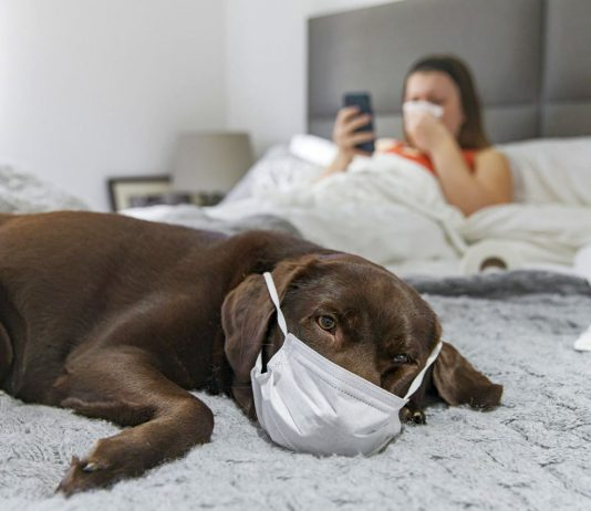 Covid, i cani possono fiutare le persone infette