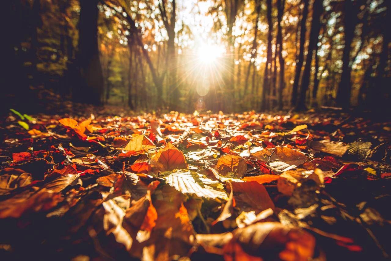 Previsioni meteo 11 novembre: bel tempo, resiste l'anticiclone