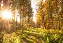 Previsioni meteo 25 novembre: avanza (finalmente) il bel tempo