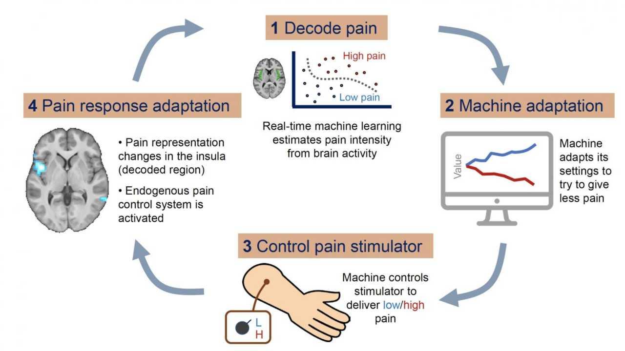 Decoded Neurofeedback