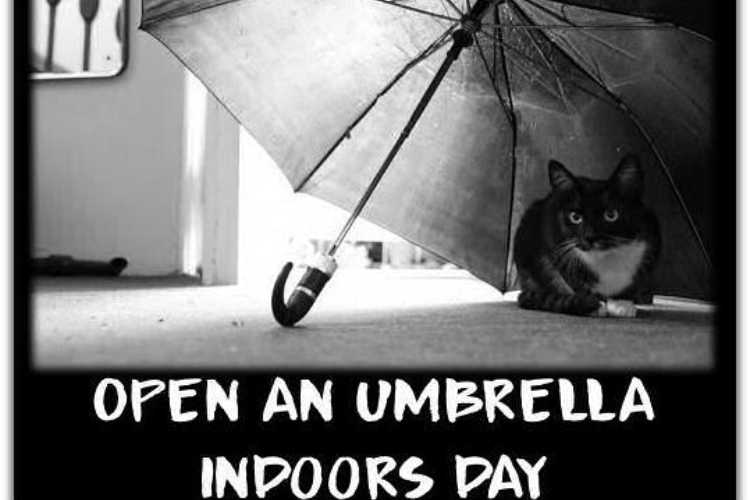 Open an umbrella indoors day 2