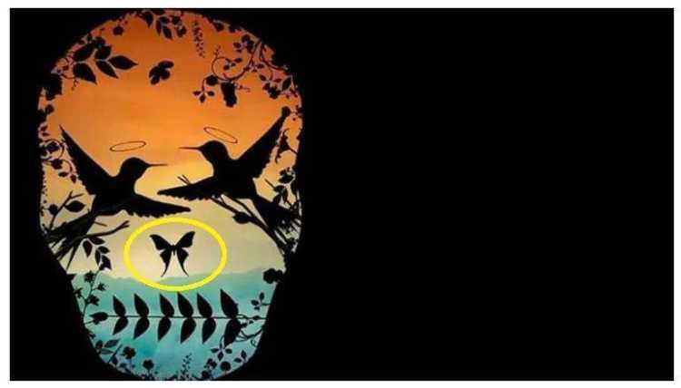 Test pregi farfalla