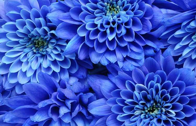 Colore preferito blu