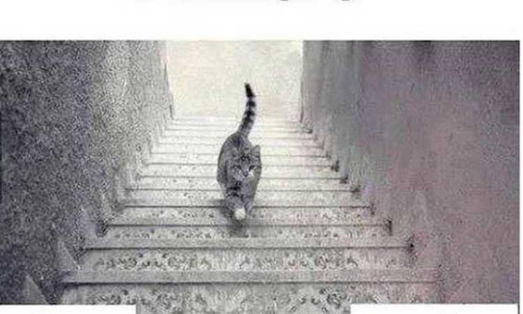 Test gatto sale scende scala