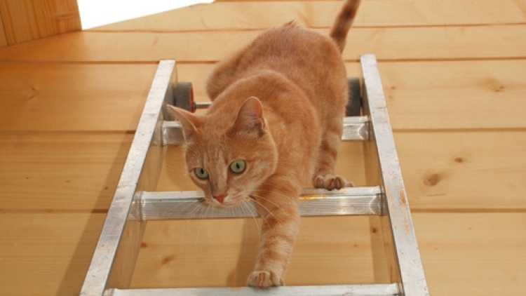 Test gatto scala
