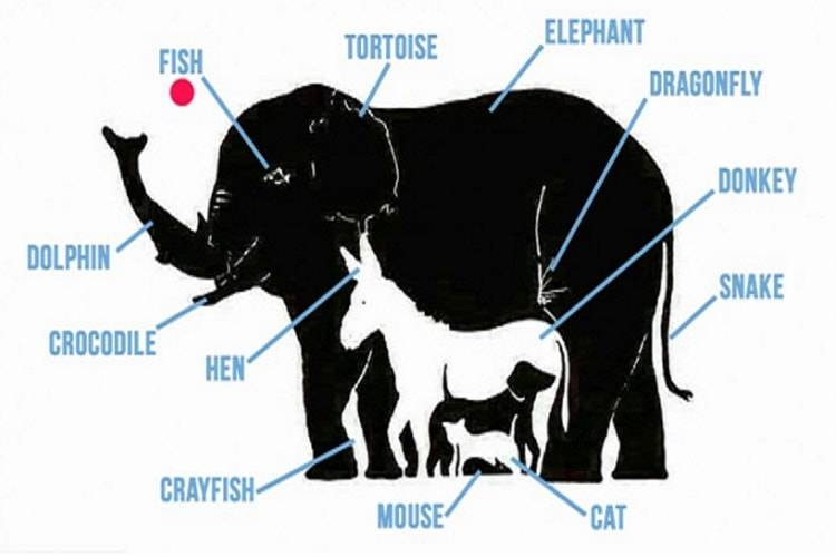 Test animali soluzione