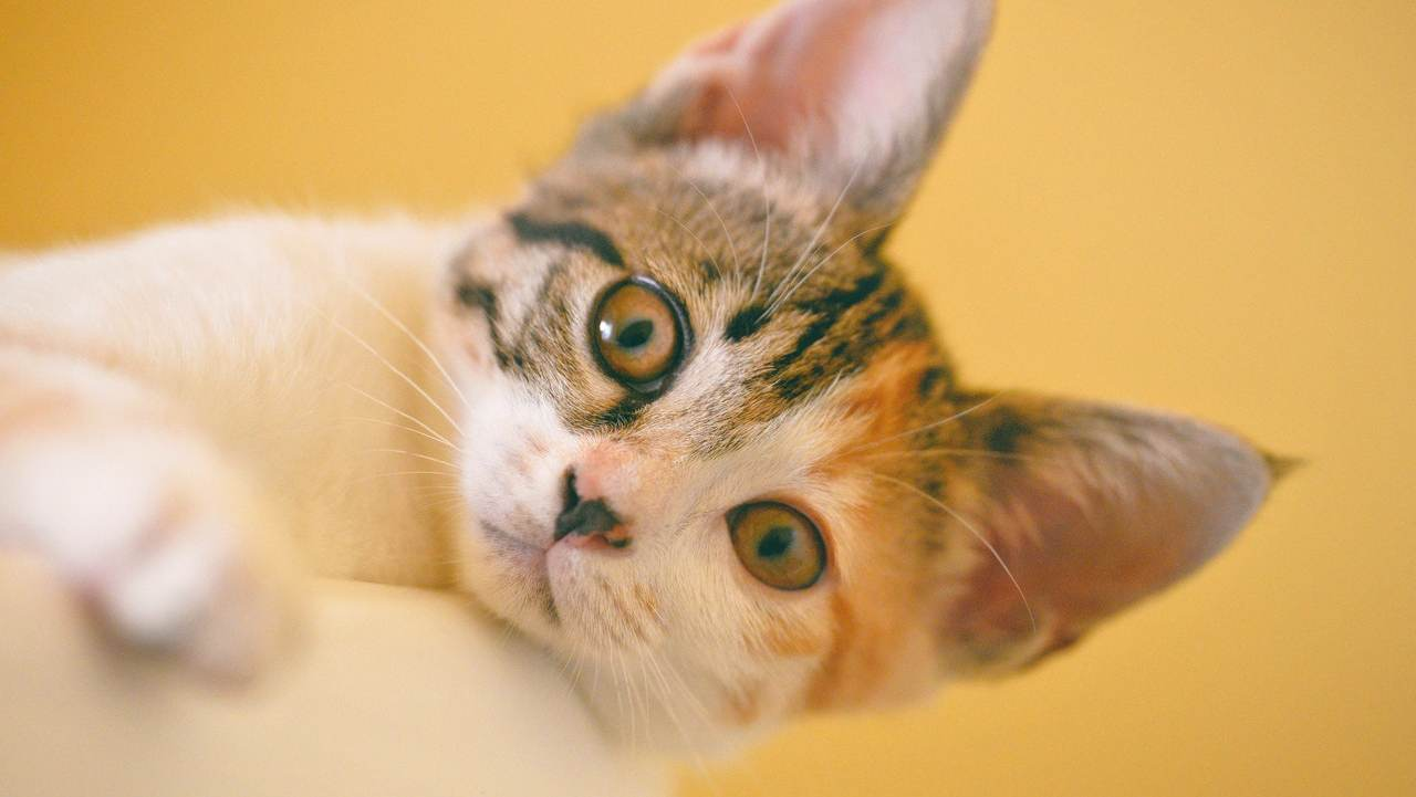 segni zodiacali che amano i gatti
