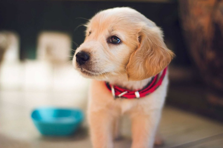 Cucciolo cane occhiolino