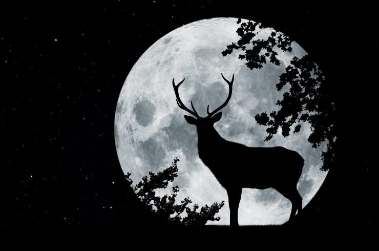Luna piena cervo