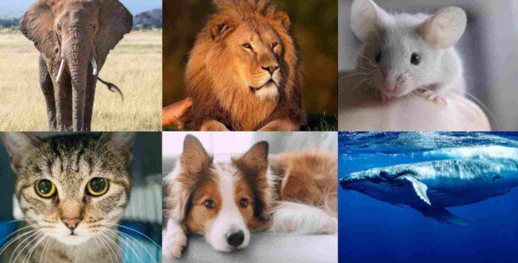 Test animale preferito