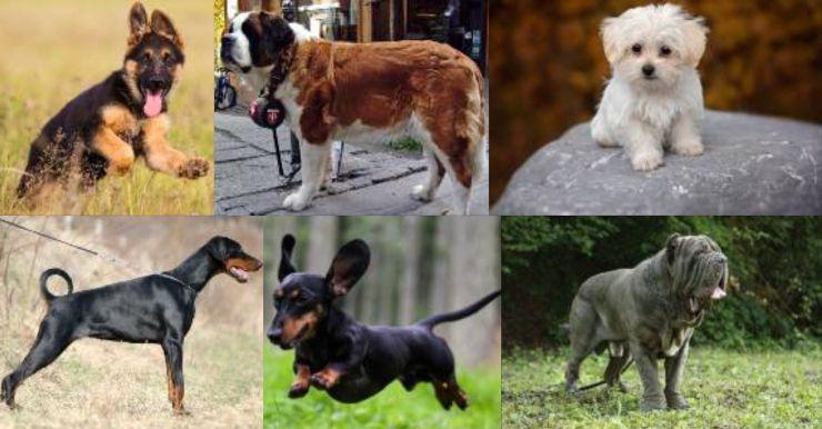 Test cane preferito