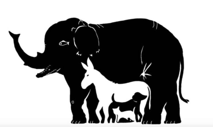 Test numero animali