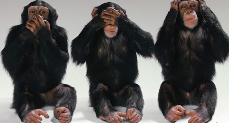Test quale scimmia scegli