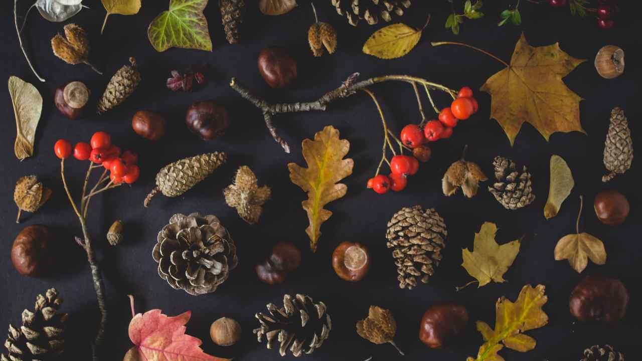 i segni che amano l'autunno
